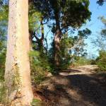 Trail leading over a rise south of Patonga Creek