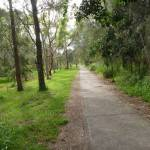Forest with footpath on the Owens Walkway in Redhead