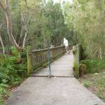 Timber platform over Owens Creek on the Owens Walkway in Redhead