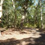 Trail in forest in Blackbutt Reserve