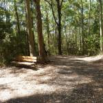 Seat on the Tall Trees walk in Blackbutt Reserve