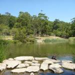 Large pond with swans in Richley Reserve in Blackbutt Reserve