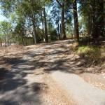 Trail near Dunkley Ave in Blackbutt Reserve