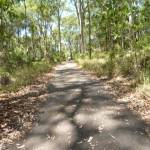 Sealed trail in the Blackbutt Reserve