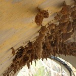 Wild bee hive near Devils Hole Creek