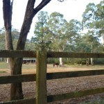 Horse Paddock at the old Megalong Village site