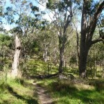 Open forest east of Megalong Rd