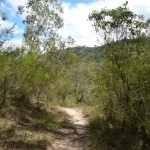 Six Foot Track east of the Coxs River