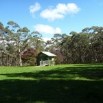 Large Grassy Black Range Camping Ground