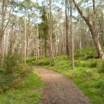 Six Foot Track west of Black Range Camping Ground