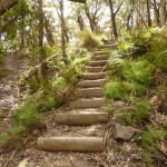 Timber steps on west side of Jenolan Caves Rd
