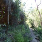Berowra Track in Waratah Gully