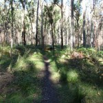 Track to Acacia Flats