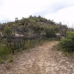 Track to Mt Wondabyne peak