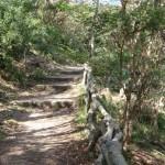 Track east of Taronga Zoo