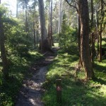 Track just north of Berowra Valley Bushland Park