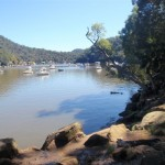 path winding around Berowra creek