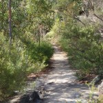 Track to Martin's Lookout