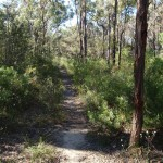 Track along St Helena spur