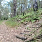 Intersection with steps on concreted trail
