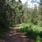 following the georges river service trail