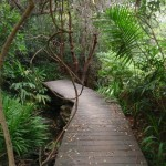 Manly Scenic Walkway boardwalk