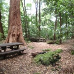 Leura Forest picnic benches