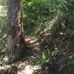 Track to Top Vera Falls