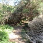 Track leading through the bush